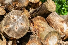 Pile of chopped stumps in the forrest close up royalty free stock images