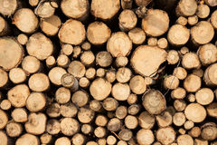 Pile of chopped wood Royalty Free Stock Photo