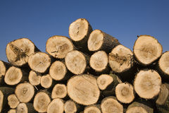 Pile of chopped wooden logs Stock Image