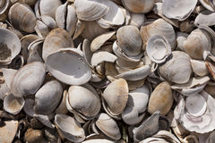 Pile of clam shells in Wellfleet, MA Royalty Free Stock Photo