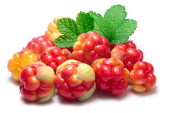 Pile of cloudberries (Rubus Chamaemorus) Stock Images