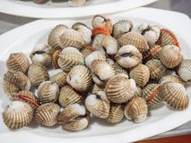 Pile Cockles fresh put on the dish for sale. Stock Photos