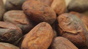 Pile of cocoa seeds on wooden table. Macro view. Concept of healthy food. stock video