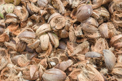 Pile of coconut husk Royalty Free Stock Images