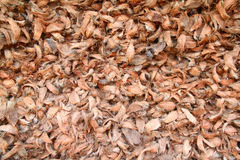 Pile of coconut shell Stock Photography
