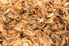 Pile of coconut spathe Stock Photo