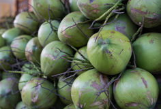 Pile of coconuts Stock Images