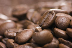 Pile of Coffee Beans Close Up Stock Image