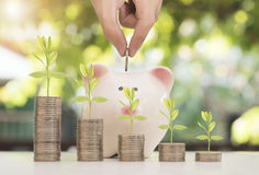 Pile coin with tree and piggy bank. hand save growing money Stock Image