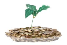 Pile of coins with money tree isolated at a white background Stock Image