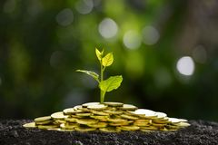 Pile of coins with plant on top for business, saving, growth, economic concept. Image of pile of coins with plant on top for business, saving, growth, economic Royalty Free Stock Images