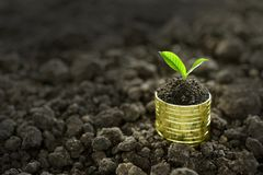 Pile of coins with plant on top. Image of pile of coins with plant on top for business, saving, growth, economic concept Stock Photography