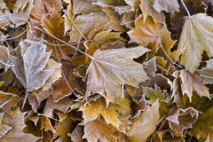 Pile of colorful autumn leaves. Royalty Free Stock Photography