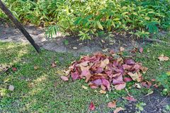Pile colorful dry leaves on grass in garden royalty free stock photos