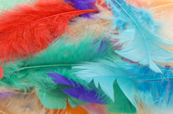 Pile of colorful feathers Royalty Free Stock Image