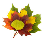 Pile of colorful leaves Stock Photos