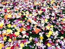 Pile of Colorful Leaves on Grass royalty free stock image