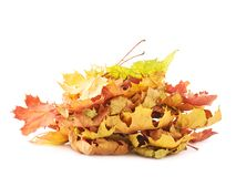 Pile of colorful maple leaves isolated Royalty Free Stock Photo