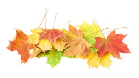 Pile of colorful maple leaves isolated Royalty Free Stock Images