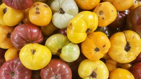 Pile of colorful organic tomatoes stock photos