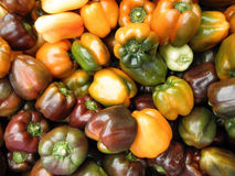 Pile of colorful peppers in a market place Royalty Free Stock Photo