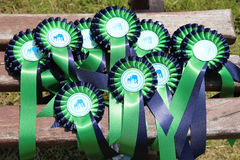 Pile of colorful ribbons for prize winner horse breeders. Group of perfect equine rosette ribbons for prize winner horses Royalty Free Stock Photo