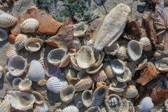 Pile of colorful shells on sandy beach stock photos