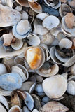 Pile of colorful shells Stock Photo