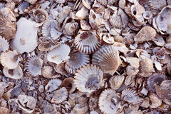 Pile of colorful shells Stock Photos