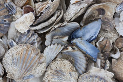 Pile of colorful shells Stock Images