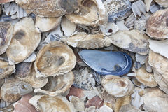 Pile of colorful shells Royalty Free Stock Image