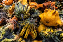 Pile of colourful gourds royalty free stock image
