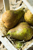 Pile of conference pears in wooden box on straw, fall harvest, gardening, local produce Royalty Free Stock Photo