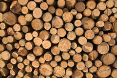 Pile of coniferous fire-wood. Close-up Stock Image