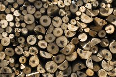 Pile Of Coniferous Fire-Wood Royalty Free Stock Image
