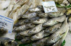 Pile of cooled cod, fish market. In Barcelona, Spain Stock Photos