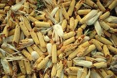 Pile of corn Stock Photos
