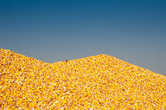 Pile of corn Stock Images