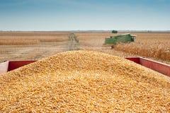 Pile corn Stock Photos