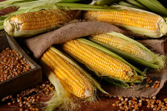 Pile corn cobs Stock Photography