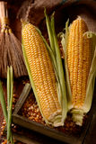 Pile corn cobs Royalty Free Stock Photo