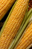 Pile corn cobs Royalty Free Stock Images