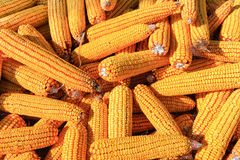 Pile of corn Royalty Free Stock Photography