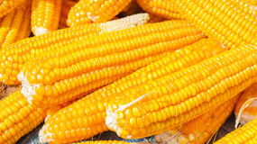 Pile of Corn Stock Image