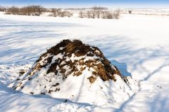 A pile of cow dung in a field in winter stock photos