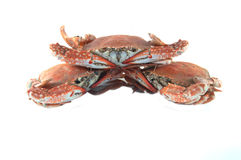 Pile crab Royalty Free Stock Photos