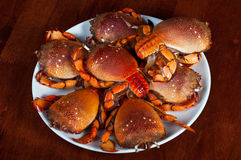 Pile of crabs Royalty Free Stock Images