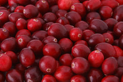 Pile of Cranberries. Closeup of a pile of cranberries Stock Image