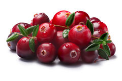 Pile of cranberries with leaves, paths Royalty Free Stock Images