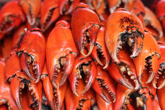 Pile of craw crabs Royalty Free Stock Photos